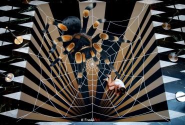 Spinnenhöhle in den Münsterarkaden 2018 Teil 2