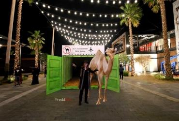 Mein Freund Kamel Klaus aus dem Krefelder Zoo landet in Dubai zum Heimaturlaub