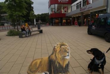 3d streetart Löwe in Meppen